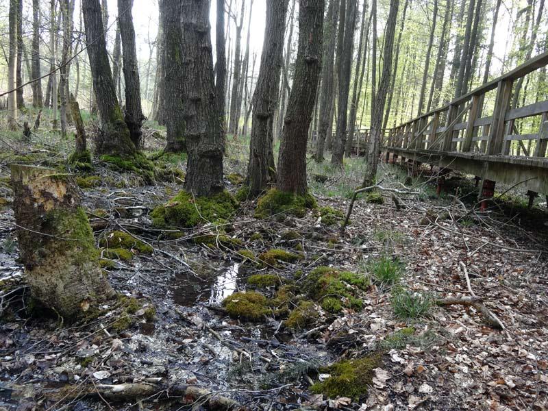 Quellwald-Kalksinterterrassen